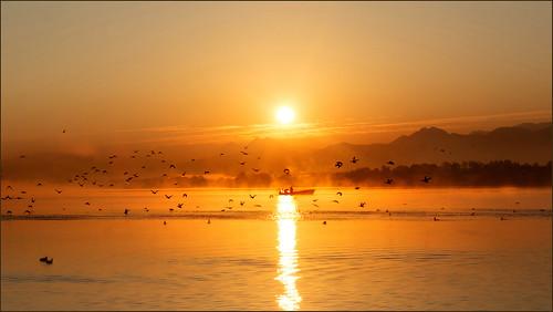 chiemsee bavaria bayern alpen alpes morning sonnenaufgang sunrise see nebel groupenuagesetciel germany deutschland harras boot vögel morgens foggia fog alba