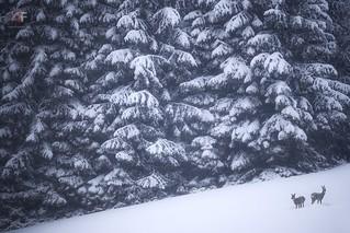 Winter wonderland   by stephan_amm