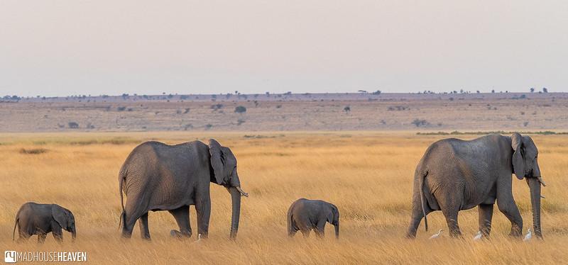 Kenya - 0177