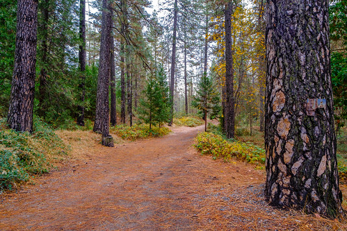 xt3 landscape empiremine hiking fuji forest trail grassvalley statepark fujifilm nevadacounty
