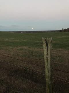 After thanksgiving walk around farm...with a full moon on the horizon... | by julian meade