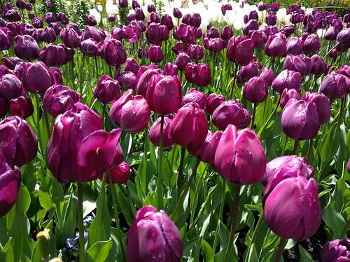 Descanso Gardens   by RuggyBearLA