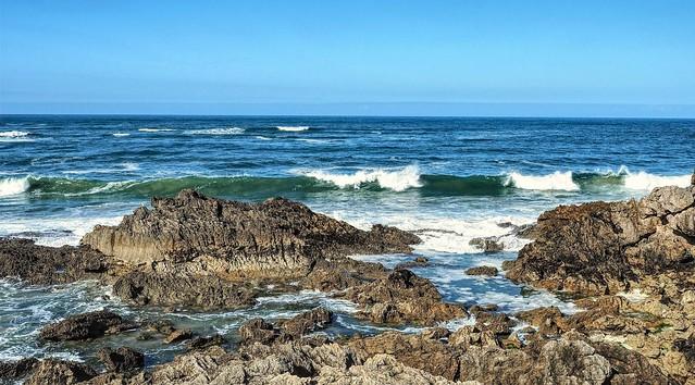 La gaviota y el mar.