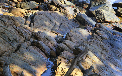 Asian water monitor hides well in the middle of the photo   by B℮n