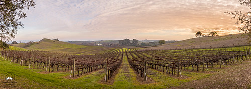 aristawinery arista califonia henryroad landscape napacounty otherkeywords wine barn clouds earlyspring grass green hdr hills house pano trees vines vineyard vineyards winery sunset pink