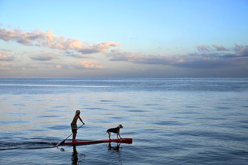 winter dog paddle bay ocean paddleboard stpetersburg northshore park best friends zen blue sunset dusk