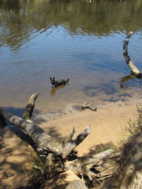 Kelpie Dip – Luke Pen Walk, Western Australia