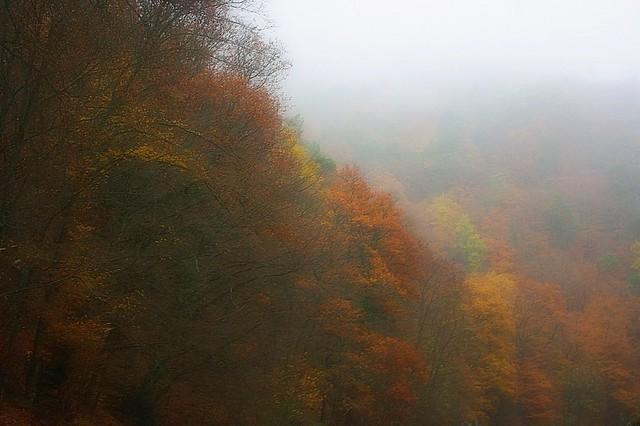 Paysage d'automne dans le brouillard -1-