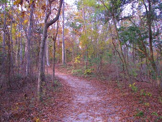 Cliffs of the Neuse State Park (3)