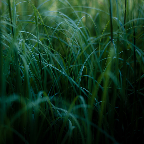 d5000 dof nikon volobog abstract blur bog depthoffield grass landscape light lines marshland natural noahbw prairie quiet square still stillness summer wetlands