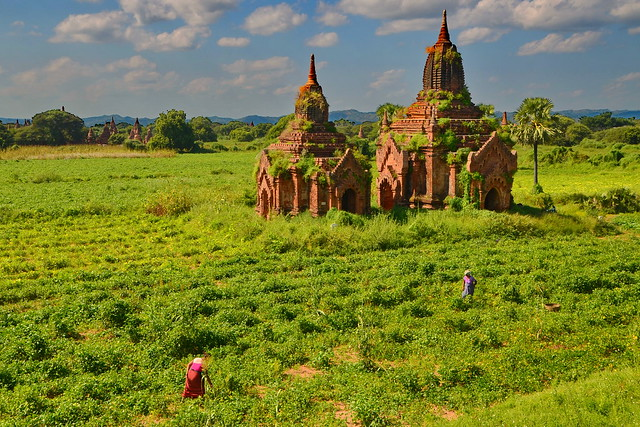 Stupas in the fields
