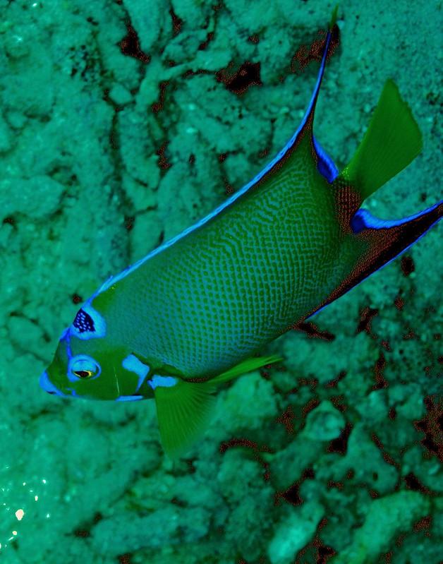 Aruba scuba shots videos 370