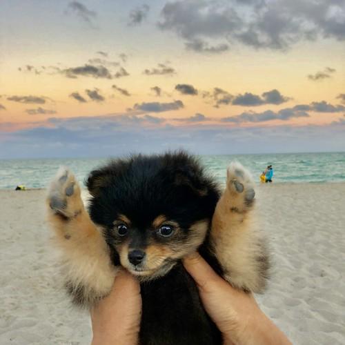Teddy at Miami Beach!