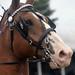 Horses 2018-Ellen Guilford