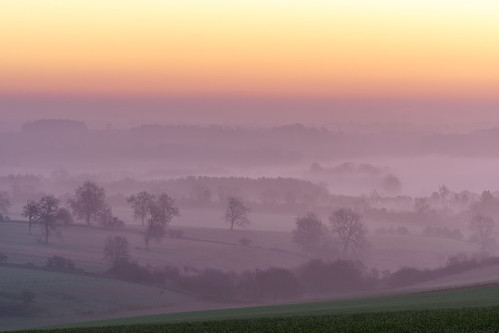 templeguiting gloucestershire cotswolds dawn sunrise dawnmist mist misty mistytrees trees light landscape sony a7iii 70200mmf4 jactoll