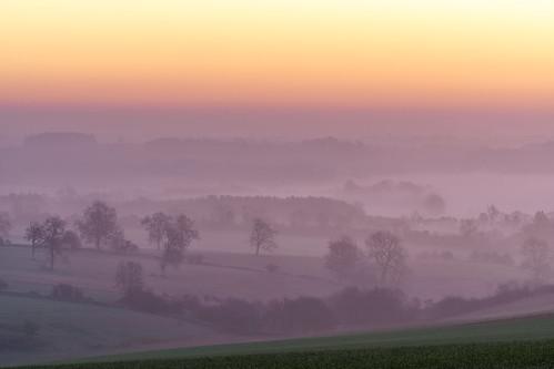 templeguiting gloucestershire cotswolds dawn sunrise dawnmist mist misty mistytrees trees light landscape sony a7iii 70200mmf4 jactoll