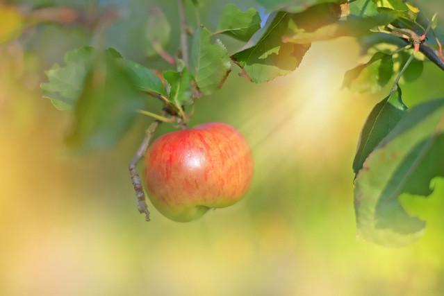 Forbidden Fruit...