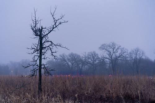 asylumlakepreserve kalamazoocounty michigan us unitedstates fall fog kalamazoo landscape outdoor overcast park winter