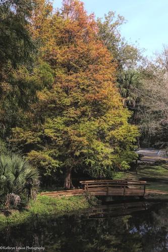 canon florida kathrynlouise autumn fall bridge pond landscape trees hiking palatka floridatrail fta