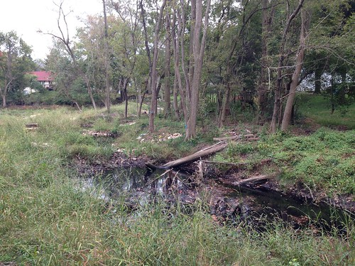 Photo of trees planted along a streamside in a residential neighborhood