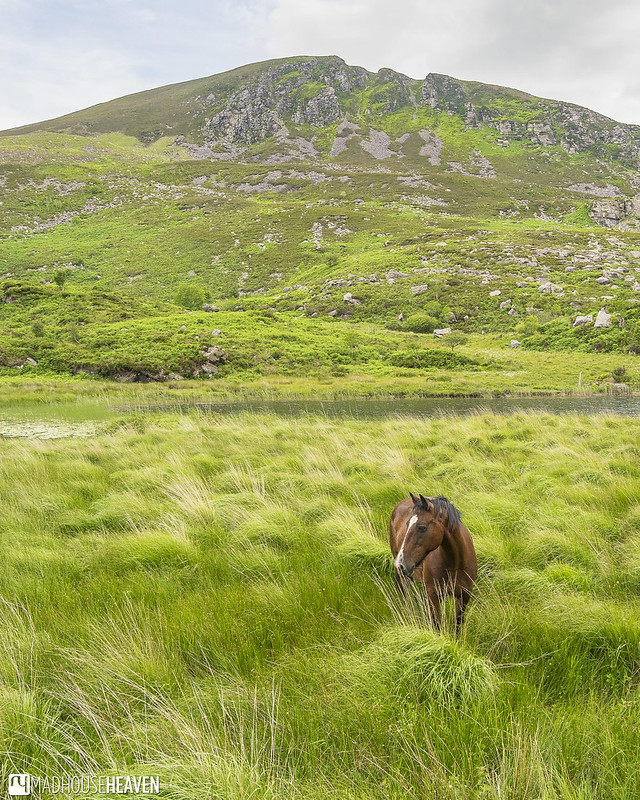 Ireland - 0108