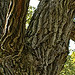 treeNarrow