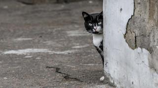Black cat around the corner ... \ Чёрный кот за углом... | by Nitohap