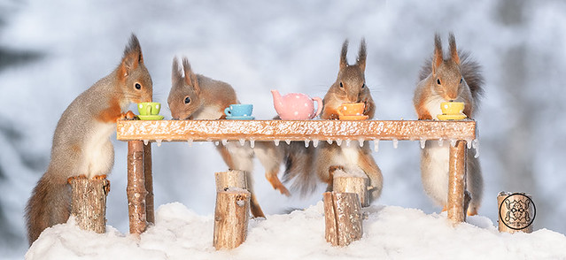 red squirrels standing around a table with cups