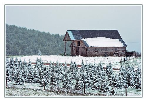 virginia blueridgemountains snow blueridgeparkway christmastrees geotagged