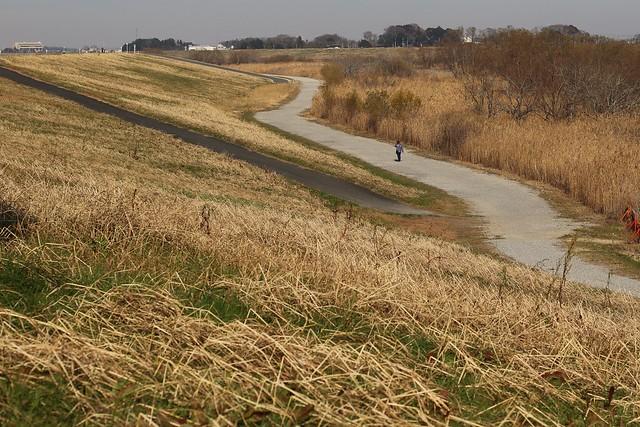 Autumn Riverbed