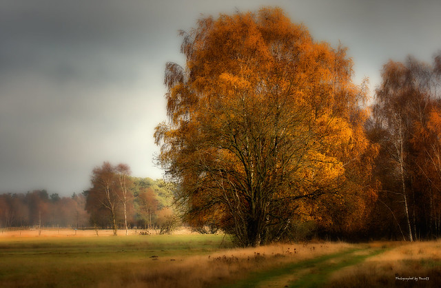 Pietzmoor - Herbstfarben