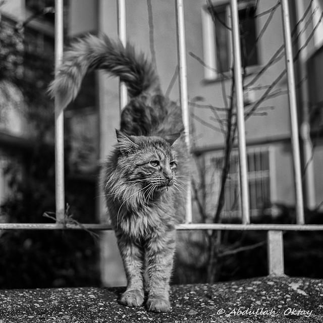 Cat 80