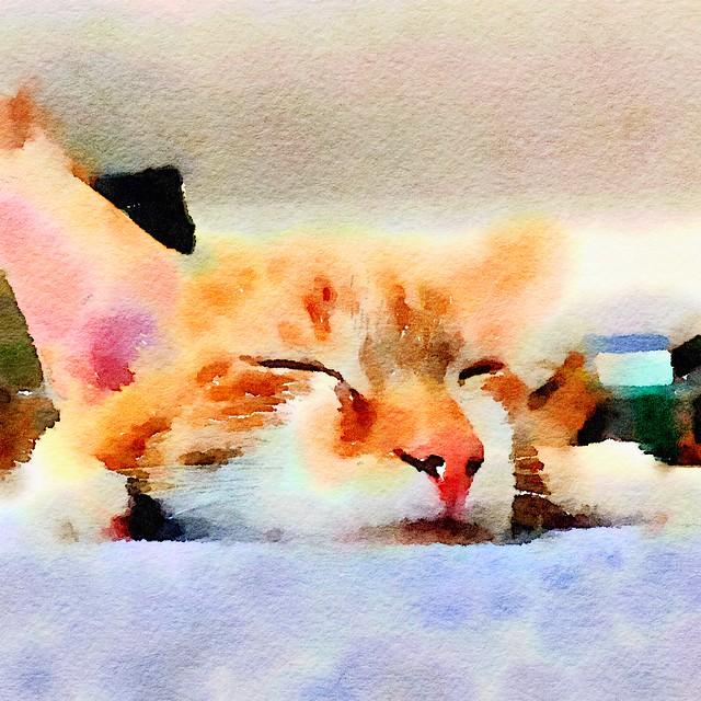 Sleepy Cat #Waterlogue