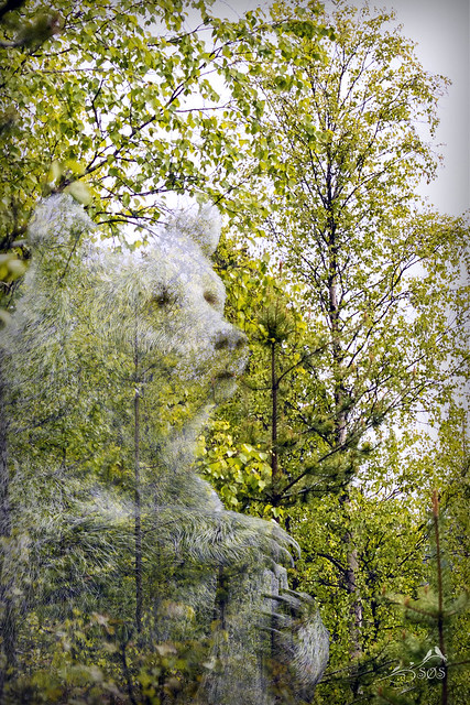 _MGL4955 The hidden Bear.