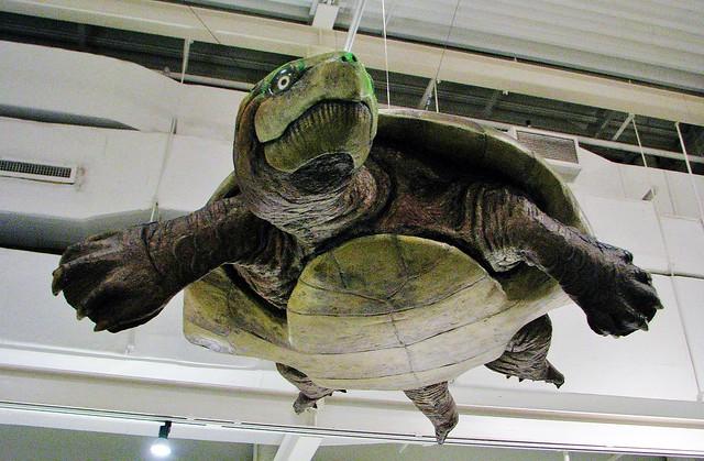 Carbonemys cofrinii --  an extinct neotropical turtle 4562