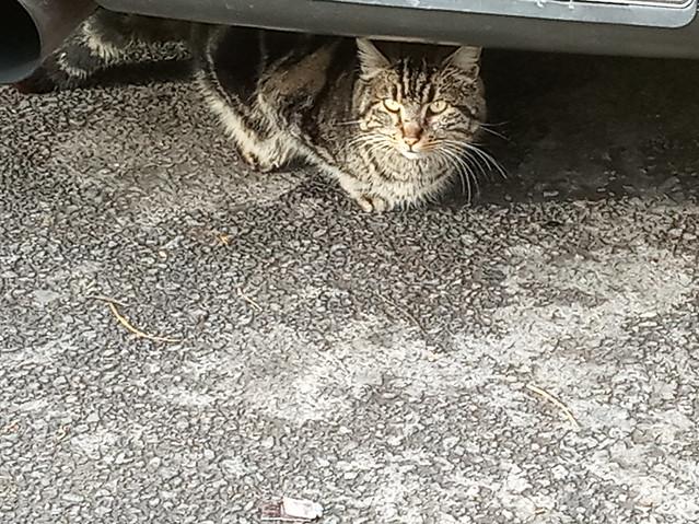 A cat from Athens, Μια γάτα από την Αθήνα, Atinalı bir kedi
