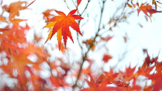 遲 來 的 秋 天