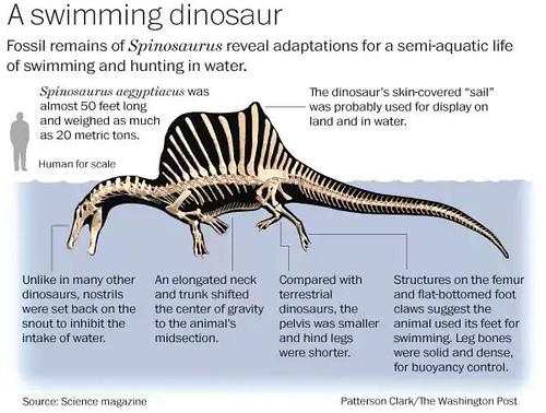 Spinosaurus (Skeletal Reconstruction)