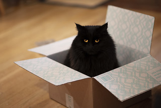 cat in a box | by Robert Couse-Baker