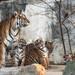 Die komplette Rasselbande aus den Tierpark by marionB-fotografie