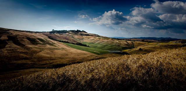 Fields at Crete Senesi