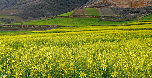 nature view ladnscape travel iran tourism outdoor natures mountain green yellow
