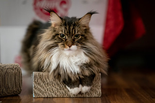 038 - cats cats cats- B9504252 | by NEX69
