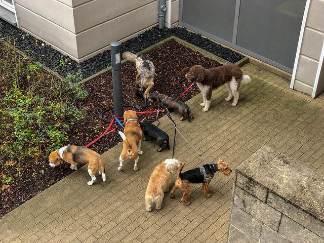 Dog Pack: Hunderudel