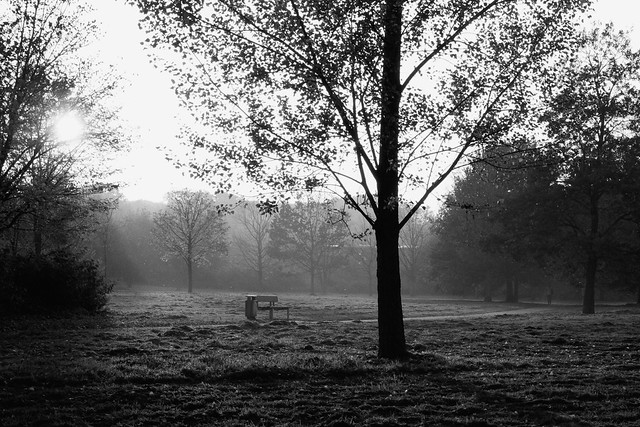 Bench In Early Winter - I shot film