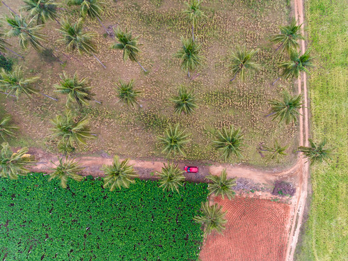 2018 bangalore digitalphotography india lrthefader photography rubenalexander susanalexander thewandererseyephotography aerial aerialphotography aerialview cultivation farm fieldofgold geometry green lines red shadows single topview yellow