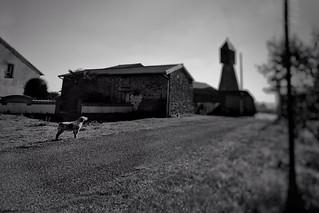 Guarding the estate | by LUMEN SCRIPT