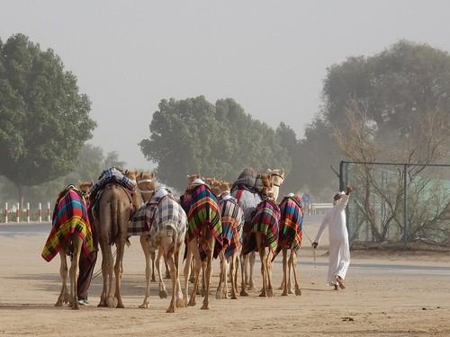 Al Marmoom Camel Racing Track - 17