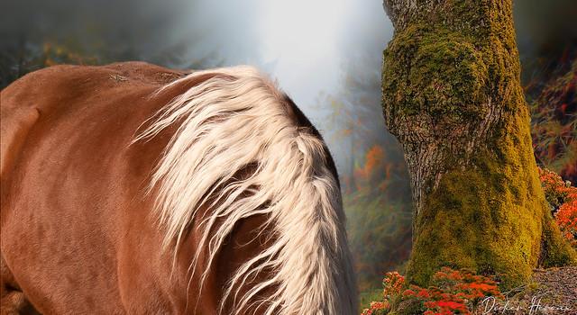 Crinière d'automne