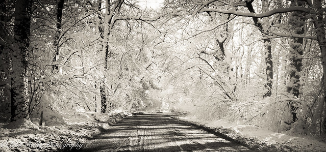 Hampshire in snow-BW